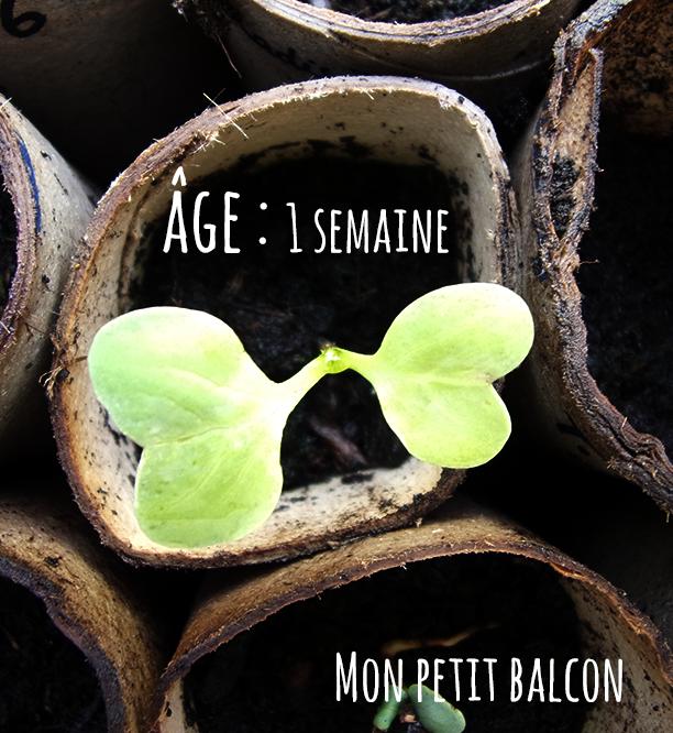 15/06/2015 sur Mon petit balcon