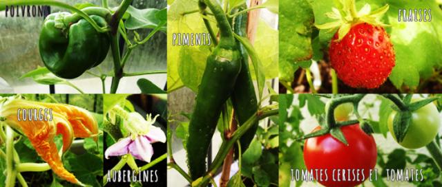 legumes_fruits_et_fruits
