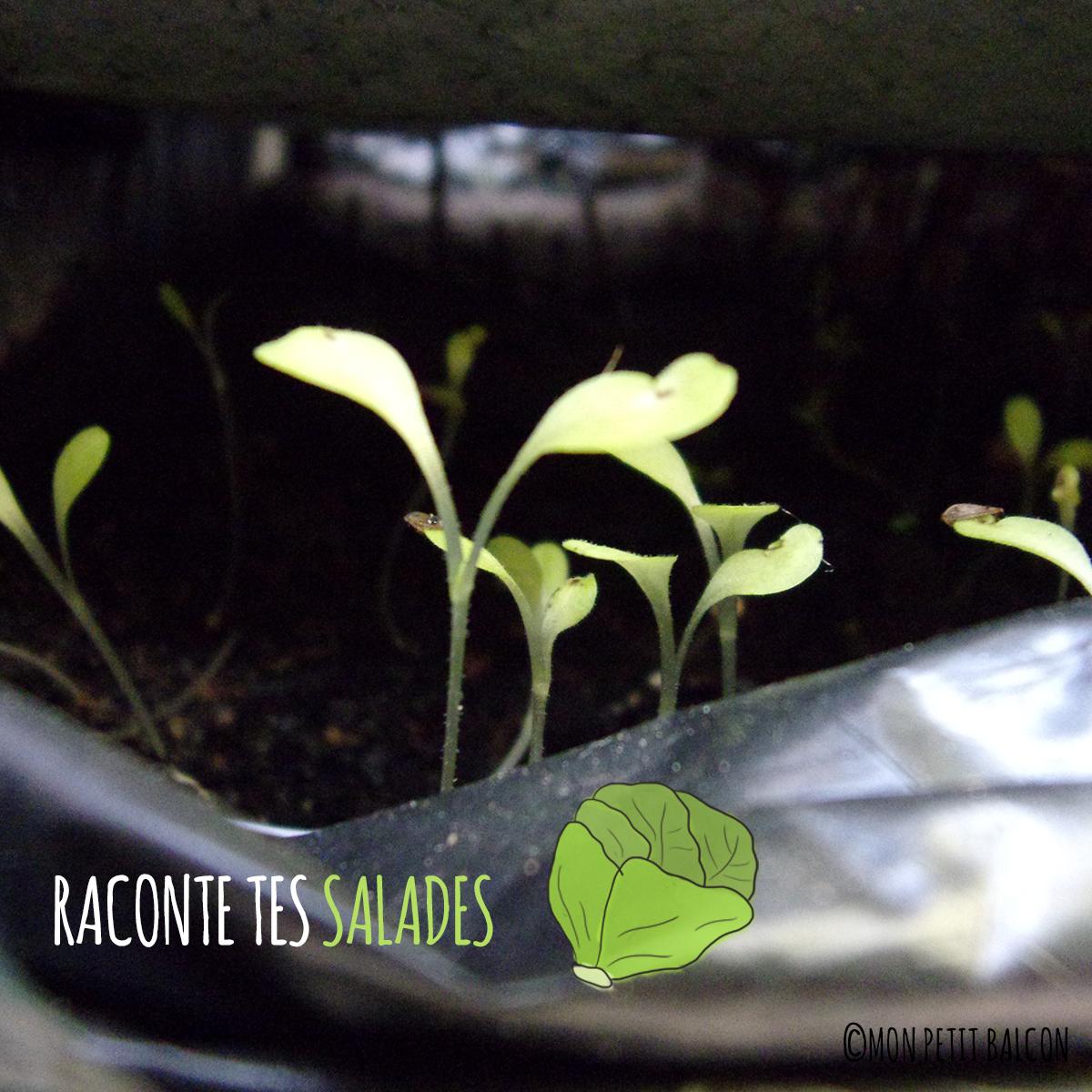 la pousse des légumes feuilles en images